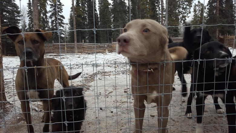Yukon appeal court urged to toss decision on controversial kennel