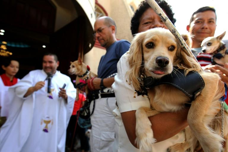 Catholic faithfuls bring their pets to be blessed at the Church of Saint Francis of Assisi, patron saint of animals, whose feast marks World Animal Day in Zapopan, Jalisco state in Mexico, on October 4, 2019 (AFP Photo/ULISES RUIZ)