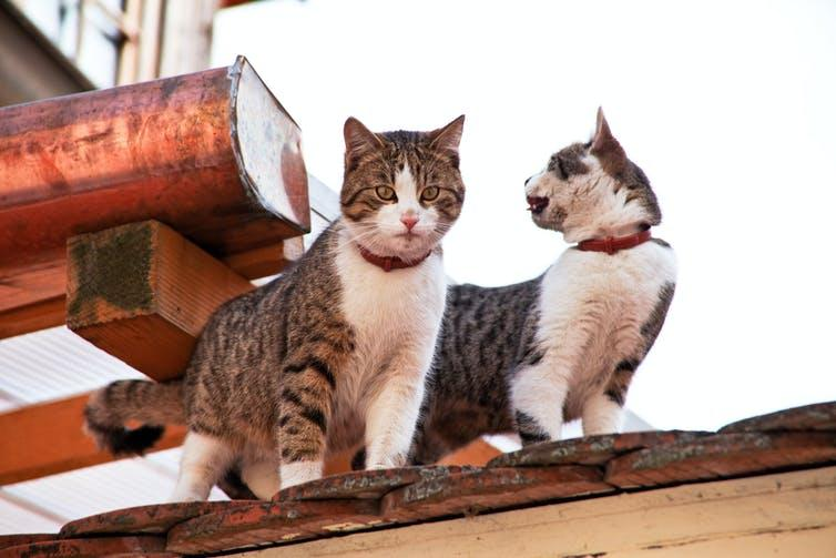 Two cats on a roof.