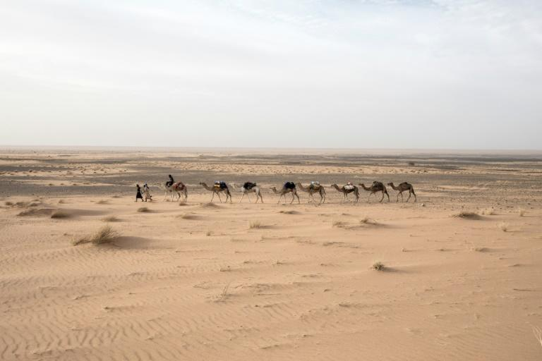 Travelling at a camel's pace provides a greater chance of spotting artefacts in the sand, Tillet says (AFP Photo/JOHN WESSELS)