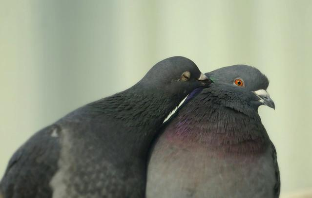 Just a peck on the cheek!