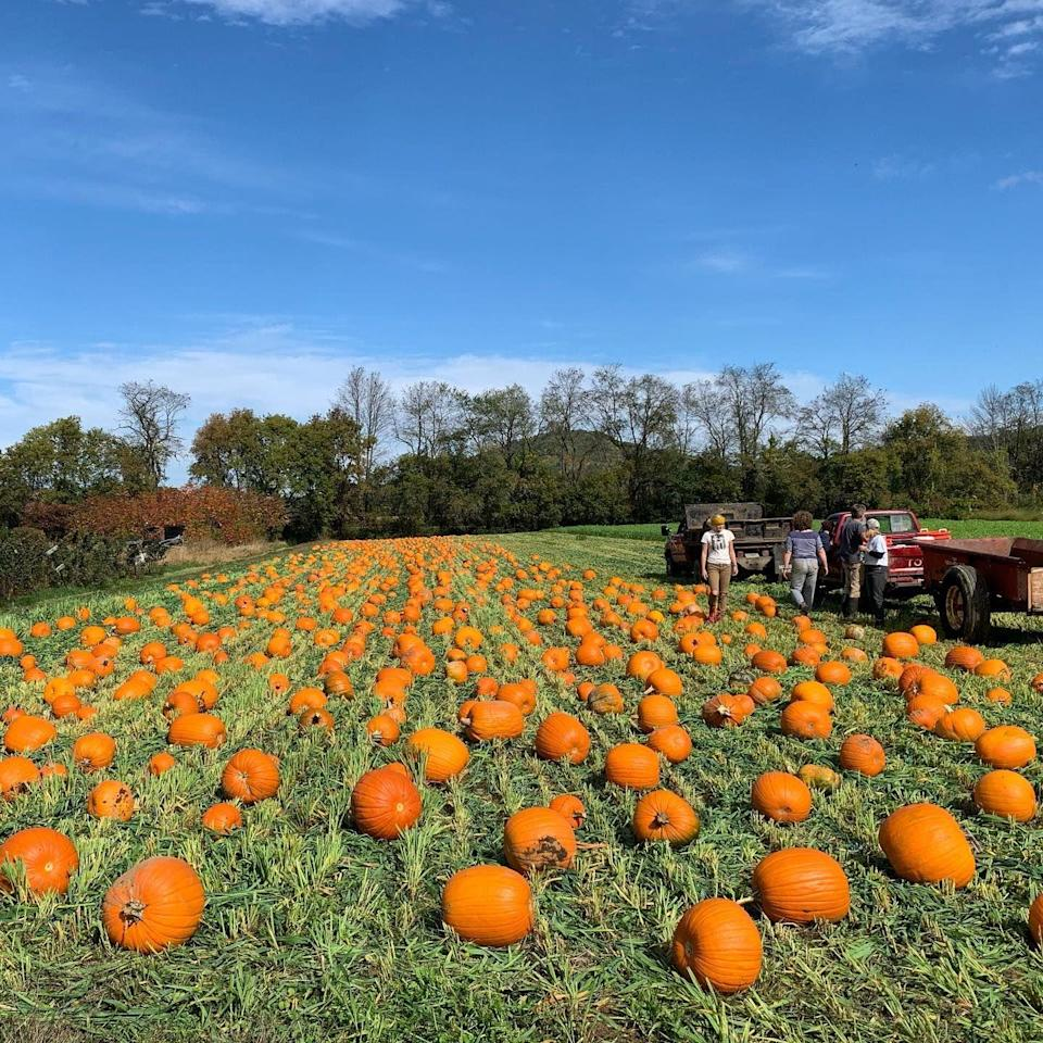 """<p><strong>East Thetford, Vermont</strong></p><p>Kicking off with its annual Pumpkin Festival, you can grab a wagon and go for your favorite pumpkin at <a href=""""https://cedarcirclefarm.org/pumpkin-festival"""" rel=""""nofollow noopener"""" target=""""_blank"""" data-ylk=""""slk:Cedar Circle Farm"""" class=""""link rapid-noclick-resp""""><strong>Cedar Circle Farm</strong></a>. The biggest day of the farm's season will certainly be the festival, which has activities both kids and adults are bound to love. The entry fee is a suggested donation of $10–20 per party. Pumpkins $0.60 per pound.</p><p><strong>RELATED: </strong><a href=""""https://www.goodhousekeeping.com/home/gardening/a28367017/growing-pumpkin-plants/"""" rel=""""nofollow noopener"""" target=""""_blank"""" data-ylk=""""slk:How to Grow a Pumpkin Plant in Your Garden This Fall"""" class=""""link rapid-noclick-resp"""">How to Grow a Pumpkin Plant in Your Garden This Fall</a></p>"""