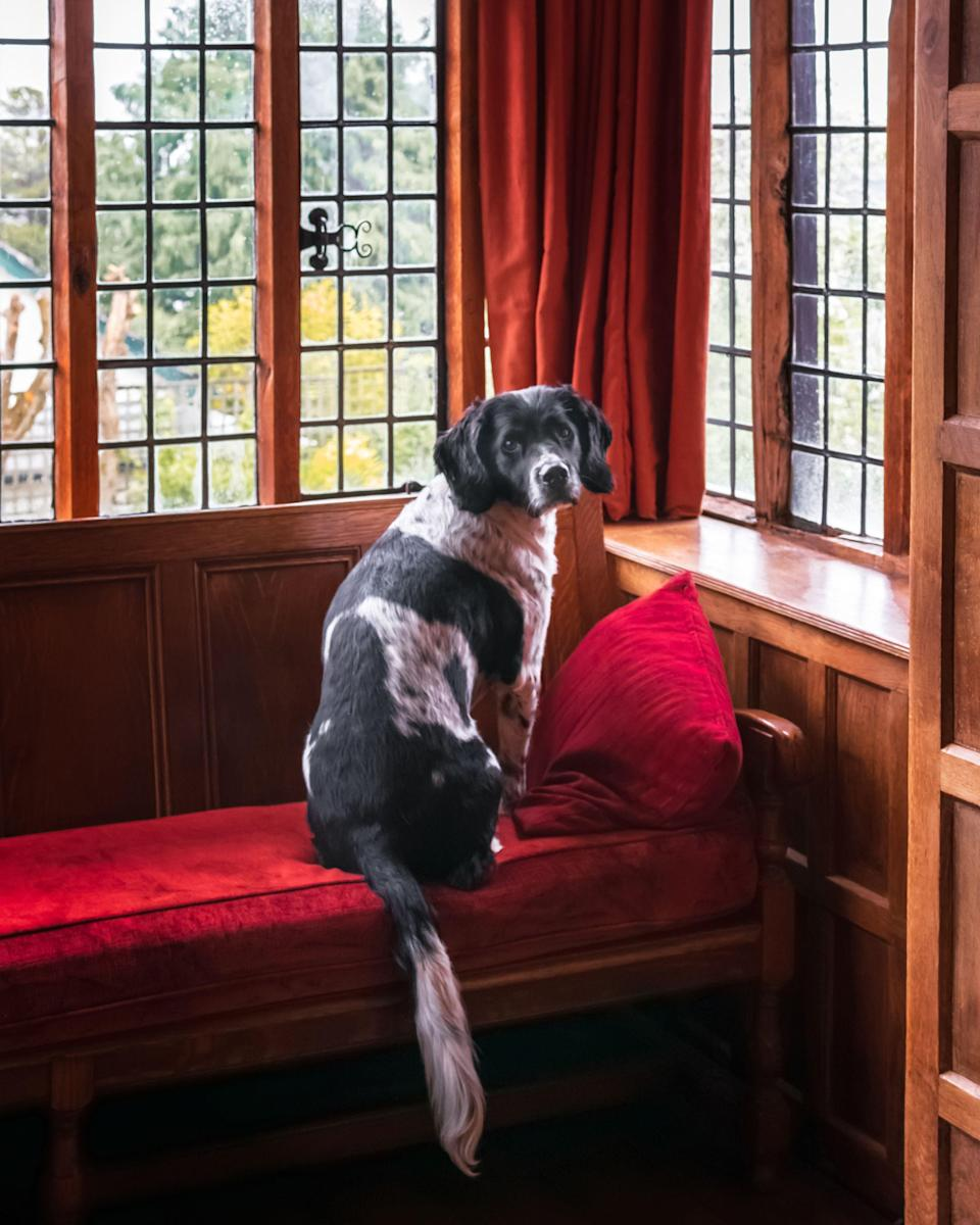 """<p>Looking for <a href=""""https://www.redonline.co.uk/travel/inspiration/a33592838/dog-friendly-beaches-uk/"""" rel=""""nofollow noopener"""" target=""""_blank"""" data-ylk=""""slk:dog-friendly"""" class=""""link rapid-noclick-resp"""">dog-friendly</a> hotels in Norfolk that don't compromise on style? We hear you. </p><p>If you're after a superb location for coastal or country walks with your pooch, Norfolk is a place worth considering this summer.<strong><br></strong></p><p><strong>Covid-19: Hotels in England are expected to open from May 17th but please check the <a href=""""https://www.gov.uk/coronavirus"""" rel=""""nofollow noopener"""" target=""""_blank"""" data-ylk=""""slk:latest guidance from the government"""" class=""""link rapid-noclick-resp"""">latest guidance from the government</a> before travelling.</strong></p><p>Thankfully, there's a whole host of dog-friendly hotels in Norfolk too, ranging from townhouse hotels and country houses, to contemporary <a href=""""https://www.redonline.co.uk/travel/inspiration/g503338/six-of-the-best-uk-hotels-with-michelin-star-restaurants/"""" rel=""""nofollow noopener"""" target=""""_blank"""" data-ylk=""""slk:restaurants with rooms"""" class=""""link rapid-noclick-resp"""">restaurants with rooms</a>.</p><p>Known for its royal rural retreats, the scenic Broads National Park, sandy beaches and unspoilt villages, Norfolk is ideal for you and your dog to explore Britain on a staycation after lockdown.<br></p><p>At the best dog-friendly hotels in Norfolk, you're invited to relax and discover the glorious surroundings with your pooch. You can enjoy a cocktail with your four-legged friend at your feet at <a href=""""https://go.redirectingat.com?id=127X1599956&url=https%3A%2F%2Fwww.booking.com%2Fhotel%2Fgb%2Fcongham-hall.en-gb.html%3Faid%3D2070929%26label%3Ddog-friendly-norfolk-intro&sref=https%3A%2F%2Fwww.redonline.co.uk%2Ftravel%2Finspiration%2Fg34450137%2Fdog-friendly-hotels-norfolk%2F"""" rel=""""nofollow noopener"""" target=""""_blank"""" data-ylk=""""slk:Congham Hall"""" class=""""link rapid-noclick-resp"""">Congham Hall</a>'s sleek hot"""