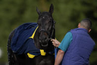 Kentucky Derby winner and Preakness entrant Medina Spirit is bathed after a workout ahead of the Preakness Stakes horse race at Pimlico Race Course, Wednesday, May 12, 2021, in Baltimore. (AP Photo/Julio Cortez)