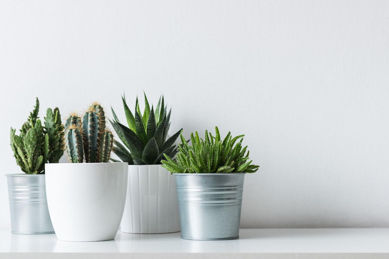 <p>Admiring plants and their beauty is something I thoroughly enjoy doing, but I completely avoid having to take care of them at all costs. Plants require care, nutrition, vitamin D, and other things that <em>I'm</em> probably not even getting enough of myself. </p><p>Which is why I rely on faux plants to bring my office space, apartment, and patio to life. Speaking from experience, finding faux plants that look real—the ones that people feel the need to touch—are hard to find.  </p><p>But you're in luck: I've done the work for you and rounded up some of the best fakes out there. Some plants (like succulents) naturally look fake or have a plastic-like appearance. These make the best faux plants, since their fakeness actually looks real. Others below are simply super well-made—some even fooled me at first. What they all have in common? The ability to successfully convince people you have a green thumb—no watering needed. </p>