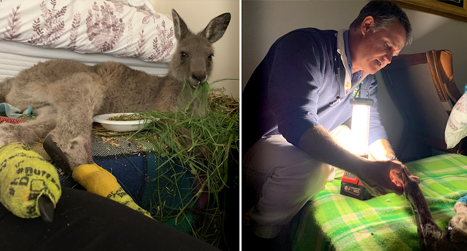 Left - Clover lying on a mattress eating grass. Right - A male vet treating Clover on her bed.