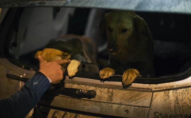 Animal activist Igor Airapetian loads stray dogs into his car brought out of Sochi by fellow activist at a rendezvous point 120 kilometers away from the Olympic area in the early morning hours of Tuesday, Feb. 11, 2014, in Tuapse, Russia. Airapetian is one of a dozen people in the emerging movement of animal activists in Sochi alarmed by reports that the city has contracted the killing of thousands of stray dogs before and during the Olympic Games. Stray dogs are a common sight on the streets of Russian cities, but with massive construction in the area the street dog population in Sochi and the Olympic park has soared. Useful as noisy, guard dogs, workers feed them to keep them nearby and protect buildings. They soon lose their value and become strays. Tonight, a few dogs will be taken on their way to a new life in Moscow. (AP Photo/David Goldman)