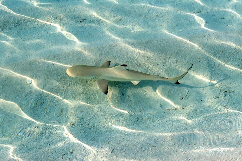A surfer brushed off a bite from a blacktip shark and went straight to the bar for free drinks. (Getty)