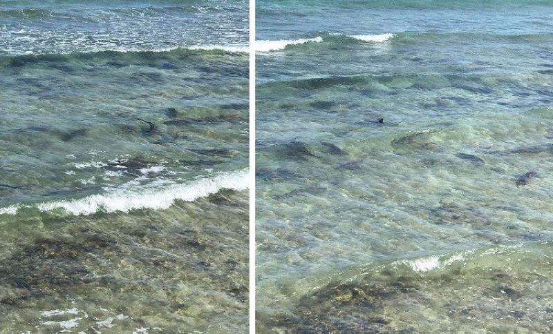 Public urged not to disturb juvenile sharks in Santander