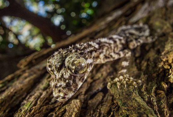 3 New Species Discovered in Australia's 'Lost World'