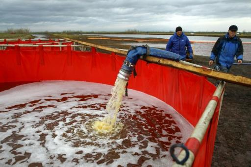 Employees of Russia's state-owned oil pipeline monopoly Transneft take part in the clean-up operation after the massive fuel spill in the Ambarnaya River last month