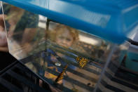 Thomas Powell, 3, looks at two newly emerged monarch butterflies in a container that are about to be released in Laura Moore's yard in, Greenbelt, Md., Friday, May 31, 2019. Despite efforts by Moore and countless other volunteers and organizations across the United States to grow milkweed, nurture caterpillars, and tag and count monarchs on the insects' annual migrations up and down America, the butterfly is in trouble. (AP Photo/Carolyn Kaster)