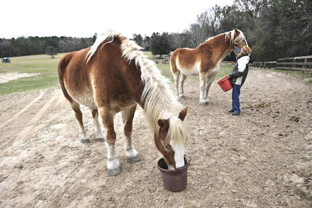 Florida is a retirement spot for horses, too