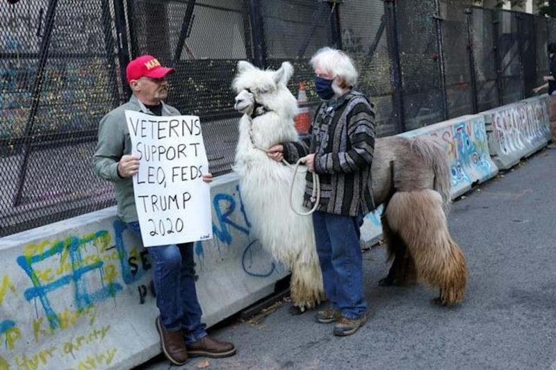 A Furry Llama Has Been Offering Hugs and Comforting 'Black Lives Matter' Protesters in Portland