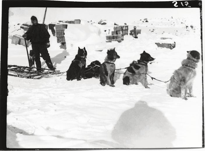 """Most likely Captain Scott's dog-driver, Demetri Gerof, with dog team, Cape Evans, October 1911.<br><br>(Photo credit: ©2011 Richard Kossow)<br><br>For more information on """"The Lost Photographs of Captain Scott"""" and where to buy the book, visit <a href=""""http://www.hachettebookgroup.com/books_9780316178501.htm"""" rel=""""nofollow noopener"""" target=""""_blank"""" data-ylk=""""slk:hachettebookgroup.com"""" class=""""link rapid-noclick-resp"""">hachettebookgroup.com</a>"""