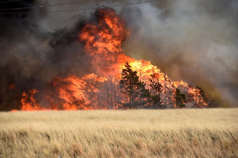 The Rhea Fire burns through a grove of red cedar trees near Seiling, Oklahoma, on April 17. (Nick Oxford / Reuters)