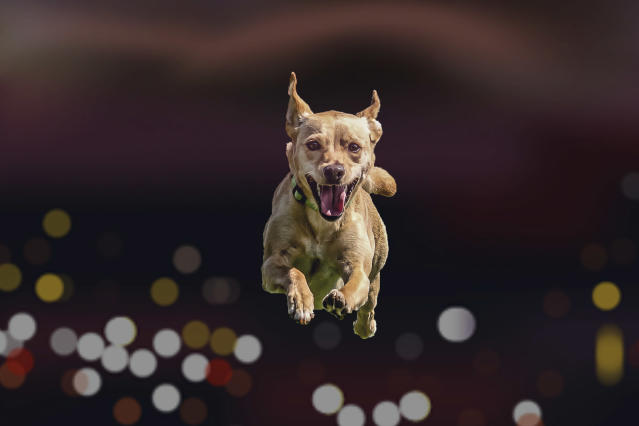 <p>Each photo shows the canines' hilarious facial expressions. (Photo: Peter Mueller/Caters News) </p>