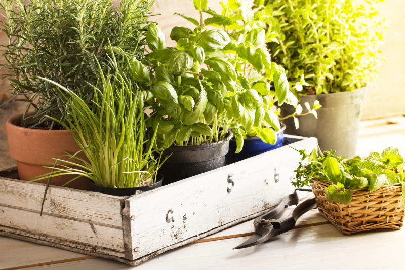 mixed herbs such as basil, chives and rosemary in pots in a wooden tray, gardening tool lying on wooden table
