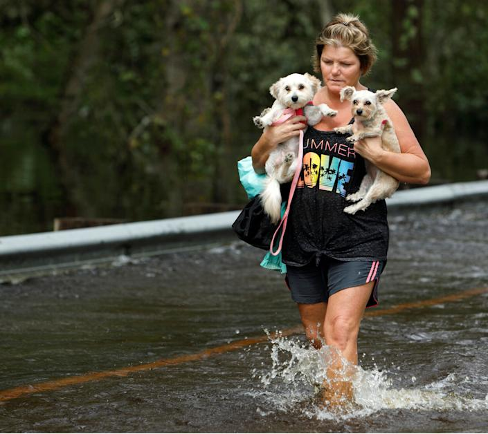 Lisa Shackleford carries her pet dogs Izzy (L) and Bella as she wades through flood waters while the Northeast Cape Fear River breaks its banks in the aftermath Hurricane Florence in Burgaw, North Carolina, U.S., September 17, 2018. REUTERS/Jonathan Drake