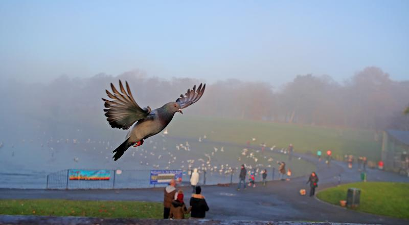 Pigeons fly above a mist covered lake in Sefton Park, Liverpool.