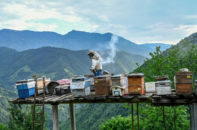 Chestnut honey is harvested from bees that forage in the threatened ecosystem that underpins the livelihoods of villagers