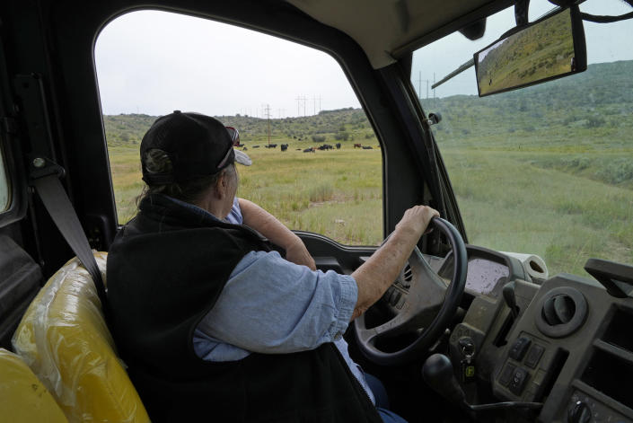 Jo Stanko, who along with her husband, Jim Stanko, are third-generation cattle ranchers, checks on some of their cattle as she drives on their ranch, Tuesday, July 13, 2021, near Steamboat Springs, Colo. Due to extreme drought conditions this year, Jim Stanko says he may have to sell some of their herd if he can't harvest enough hay to feed them. (AP Photo/Brittany Peterson)