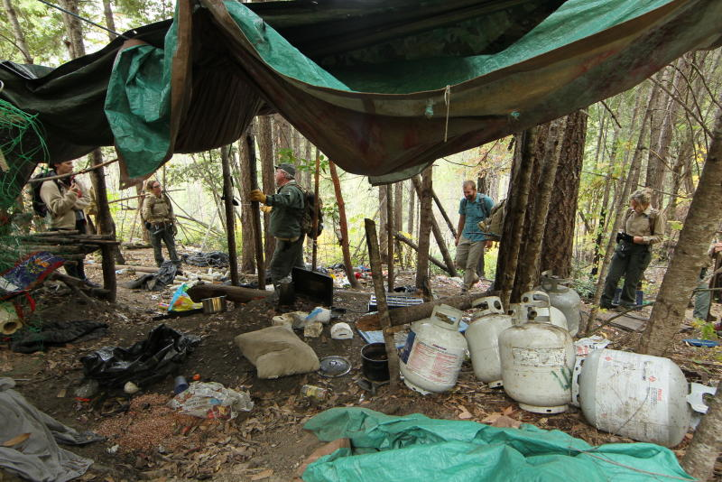 In this Wednesday, Oct. 16, 2019 photo provided by Cannabis Removal on Public Lands Project U.S. Forest Service rangers, local law enforcement, scientists and conservationists investigate a so-called trespass grow where there are nearly 9,000 cannabis plants in the Shasta -Trinity National Forest in Calif. The cannabis was illegally cultivated by alleged members of an international drug trafficking ring who set up camp in the Shasta Trinity National Forest about 100 miles (160 kilometers) from the Oregon border. Along with the hundreds of pounds of harvested marijuana, they also found thousands of pounds of trash and more than three miles (4.8 kilometers) of plastic irrigation piping, according to the Trinity County Sheriff's Office. (Hung T. Vu/CROP Project via AP)