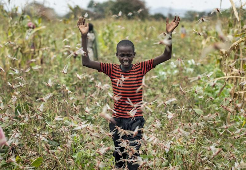 A farmer's son raises his arms as he is surrounded by desert locusts while trying to chase them away from his crops, in Katitika village, Kenya