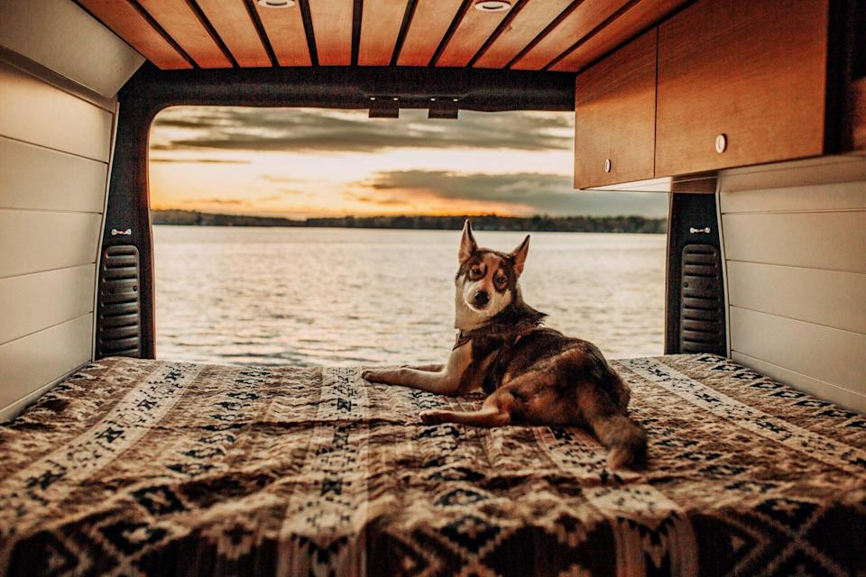 dog on a van life adventure in the back of a van looking out at the sunset over a beach
