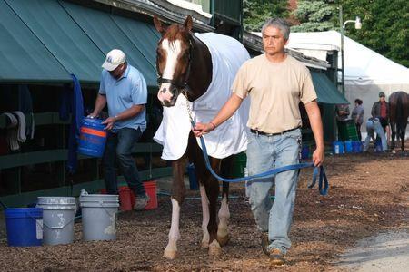 May 17, 2019; Baltimore, MD, USA; Improbable returns to the stable after a morning work out at Pimlico Race Course in preparation for the Preakness Stakes. Mandatory Credit: Mitch Stringer-USA TODAY Sports
