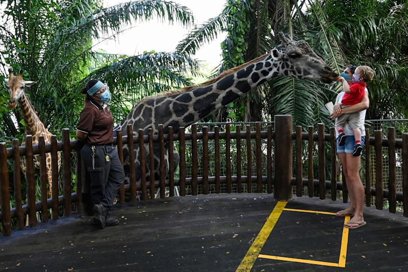 A child carried by the mother feeds the giraffe in an enclosure at the Singapore Zoo in Singapore on July 6, 2020, on its first day of reopening to the public after the attraction was temporarily closed due to concerns about the COVID-19 novel coronavirus. (Photo by Roslan RAHMAN / AFP) (Photo by ROSLAN RAHMAN/AFP via Getty Images)