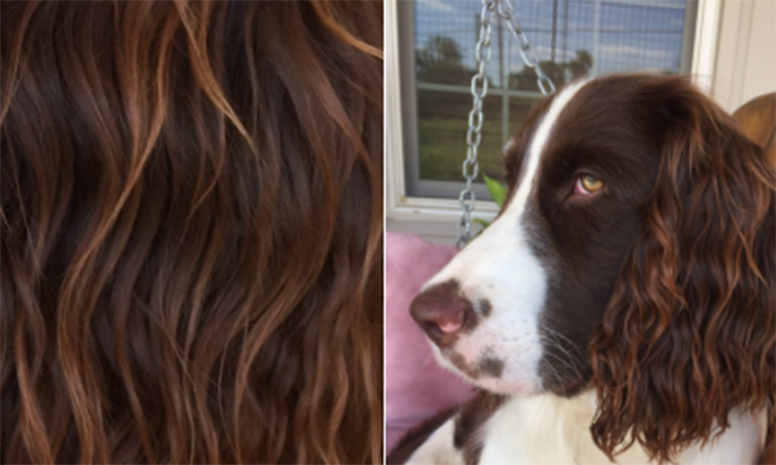 This dog is the source of your newest hair inspiration. (Photo: Twitter/kerbiegibbs)