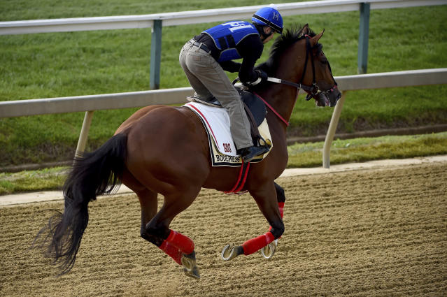 Bodexpress exercises in preparation for the Preakness Stakes, Thursday, May 16, 2019, at Pimlico Race Course in Baltimore. The race is scheduled to take place Saturday, May 18. (AP Photo/Will Newton)