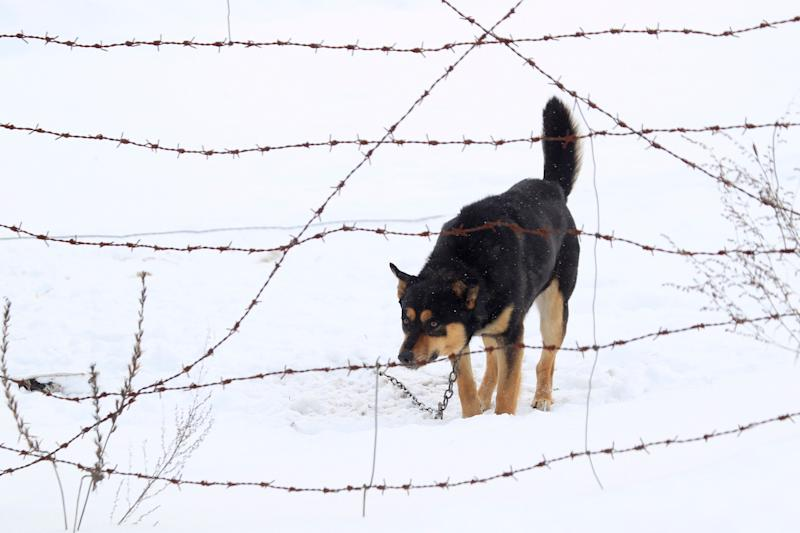 A dog stands at the barbed wire fence near the entrance to the state radiation ecology reserve in the 30 km (18 miles) exclusion zone around the Chernobyl nuclear reactor near the village of Babchin, some 370 km (217 miles) southeast of Minsk, February 21, 2011. Belarus, Ukraine and Russia will mark the 25th anniversary of the nuclear reactor explosion in Chernobyl, the place where the world's worst civil nuclear accident took place, on April 26. REUTERS/Vasily Fedosenko (BELARUS - Tags: ANNIVERSARY DISASTER ANIMALS)