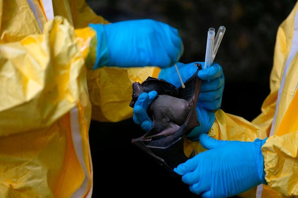 Representational: The origin of the novel coronavirus, which causes Covid, remains a mystery and has become a matter of contention among world leaders and experts alike (AFP via Getty Images)