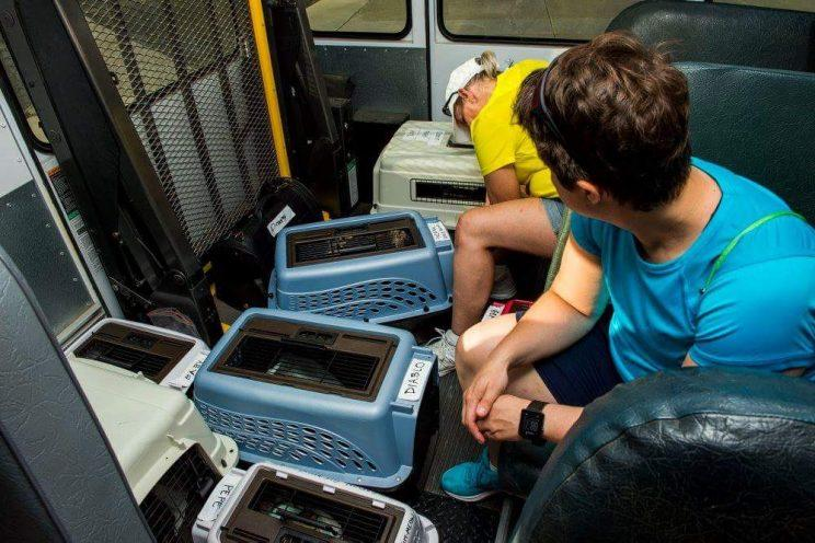 Members of Operation Git-Meow help transport cats back to the United States