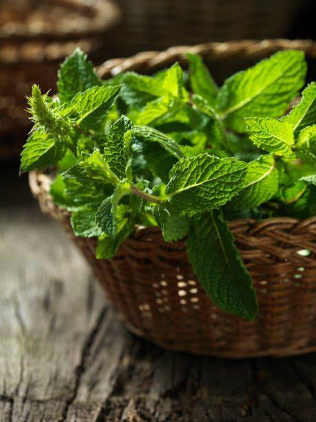 """<p>There are hundreds of varieties of mint, with flavors varying from peppermint to chocolate. Mint is one of the easiest herbs to grow. In fact, keep it in a pot or it will take over your garden! Make sure to plant in full sun (6 hours or more direct sun per day).</p><p><strong>How to use:</strong> Mint relaxes the smooth muscles of the GI tract, so it's long been used for digestive issues. When you have tummy trouble or feel nauseated, make a tea for sipping. Strip about a dozen leaves (peppermint and spearmint are especially good) and steep in one cup of boiling water until it takes on a yellowish hue.</p><p><a class=""""link rapid-noclick-resp"""" href=""""https://www.amazon.com/Three-Company-Live-Plant-Naturally/dp/B08681HC6Z/ref=pd_sbs_86_3/135-4550175-1922954?_encoding=UTF8&pd_rd_i=B07JCDZWG3&pd_rd_r=7a0b209a-373a-46f3-b1df-9d086b68d84c&pd_rd_w=SczkR&pd_rd_wg=TPdqt&pf_rd_p=c52600a3-624a-4791-b4c4-3b112e19fbbc&pf_rd_r=D23CYT4CDNZGJZ06CB2D&refRID=D23CYT4CDNZGJZ06CB2D&th=1&tag=syn-yahoo-20&ascsubtag=%5Bartid%7C10063.g.35264165%5Bsrc%7Cyahoo-us"""" rel=""""nofollow noopener"""" target=""""_blank"""" data-ylk=""""slk:SHOP MINT"""">SHOP MINT</a></p>"""
