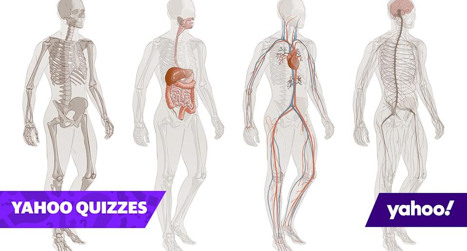 Quiz! How well do you know the names for human body parts?