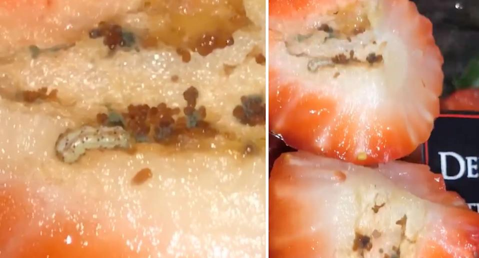 Maggots and eggs shown inside punnet of Coles strawberries bought south west of Sydney.