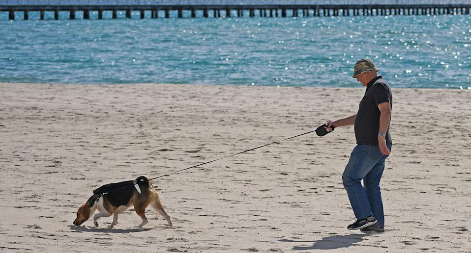 Photo shows a man on a beach in Melbourne walking a dog.
