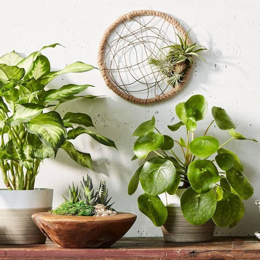"""<a href=""""https://fave.co/2xif5r3"""" target=""""_blank"""" rel=""""noopener noreferrer"""">Plants.com</a> is your destination for all things green. You'll find a <a href=""""https://fave.co/2xif5r3"""" target=""""_blank"""" rel=""""noopener noreferrer"""">wide selection</a> of all kinds of plants, from flowering <a href=""""https://fave.co/2UhR2Bq"""" target=""""_blank"""" rel=""""noopener noreferrer"""">orchids</a> and hearty <a href=""""https://fave.co/3duw8qk"""" target=""""_blank"""" rel=""""noopener noreferrer"""">bamboo plants</a>to towering <a href=""""https://fave.co/2WFy3m4"""" target=""""_blank"""" rel=""""noopener noreferrer"""">floor plants</a> and even <a href=""""https://fave.co/2WHu7RK"""" target=""""_blank"""" rel=""""noopener noreferrer"""">herbs</a>.<br /><br /><a href=""""https://fave.co/2xif5r3"""" target=""""_blank"""" rel=""""noopener noreferrer"""">Check out plants at Plants.com</a>."""