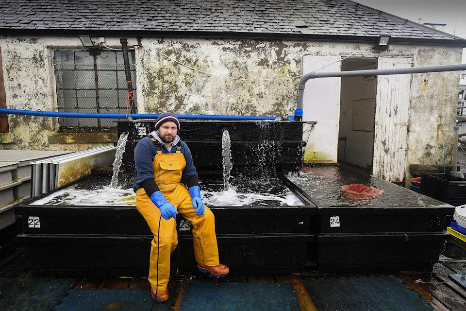 Jamie McMillan from Loch Fyne Langoustines in Tarbert, Scotland. The SNP recently claimed that a third of the Scottish fishing fleet is tied up in harbour and losing £1 million a week, causing fresh and high quality produce to be lost. Getty Images