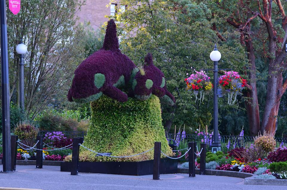 A photo of an orca-themed horticulture display taken in good weather in Victoria, B.C. (Photo: City of Victoria)