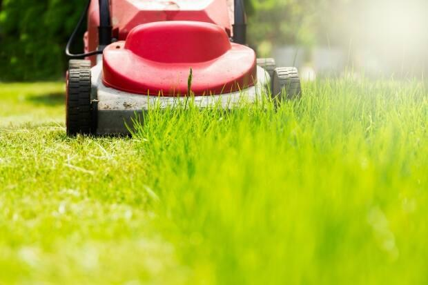 Just 10 more sleeps until no more No Mow May! The Saturday morning ritual of awakening your neighbours with the dulcet roar of a lawn mower is so close you can almost hear it.