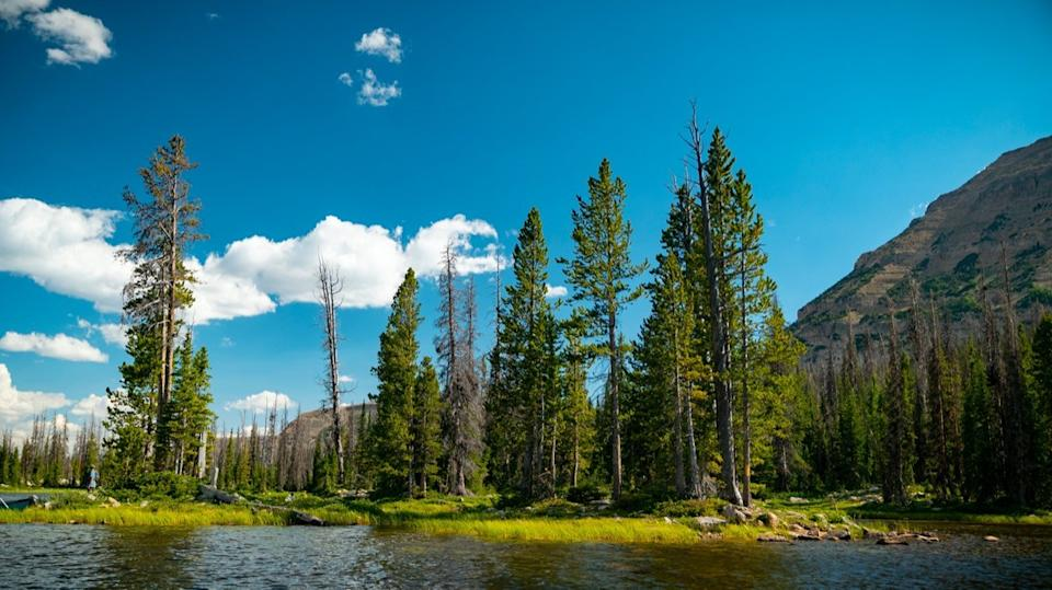 Beautiful small lake in the middle of the Uintah forest on a warm summer day in Duchesne County, Utah