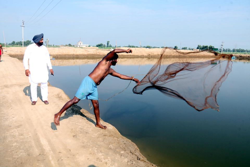 A worker casts his net into a water reservoir in Punjab on July 19, 2020 (Photo by Sanjeev Kumar/Hindustan Times via Getty Images)