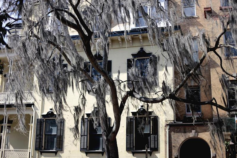 In this Feb. 21, 2011 photo, Spanish Moss hangs from a tree along a street in the historic district of Savannah, Ga. A proposal to roll out double-decker buses on the streets of historic downtown Savannah has residents complaining the change would amount to a tourism overload. Two Boston businessmen are lobbying Savannah City Hall to end a 17-year ban on double-decker buses in the downtown historic district of Georgia's oldest city. The city's Downtown Neighborhood Association is opposing the change. Its members say the buses would risk collisions with low-hanging tree limbs and would turn passengers into Peeping Toms capable of peering into second-story windows. (AP Photo/David Goldman)