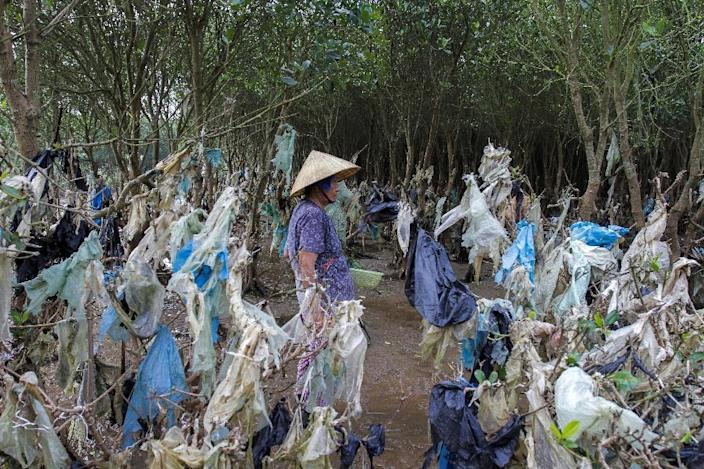A mangrove forest in Vietnam's Thanh Hoa is festooned with plastic rubbish washed in with the tide (AFP Photo/Nhac NGUYEN)