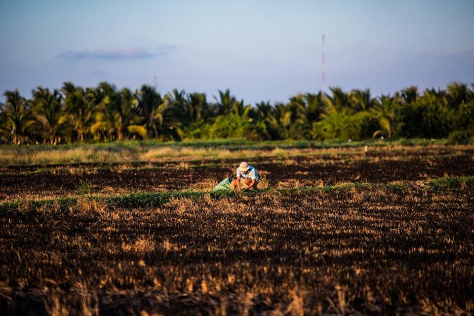 Developing countriesthat depend on agriculture and fishing  are heavily affected by ENSO (Getty Images)