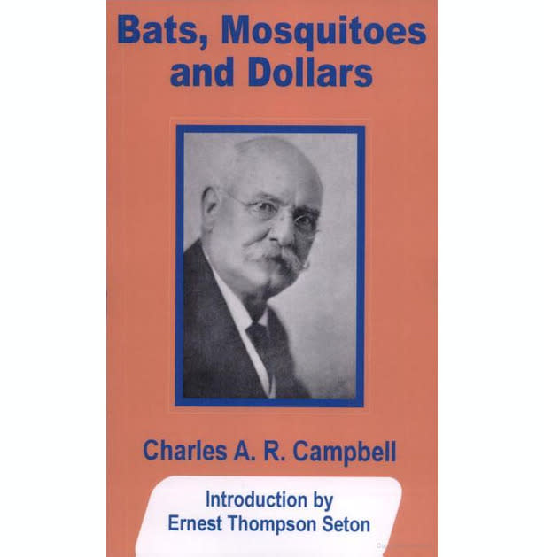 Bats Dollars and Mosquitoes.jpg